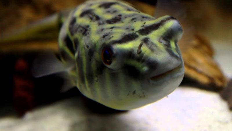Животные саванны - Фахаки