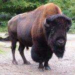 Животные Северной Америки, кто обитает