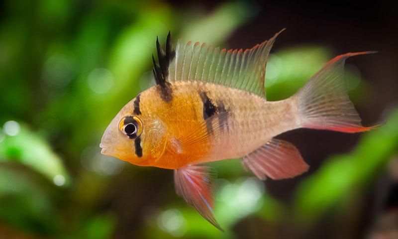 Животные Южной Америки: боливийская бабочка