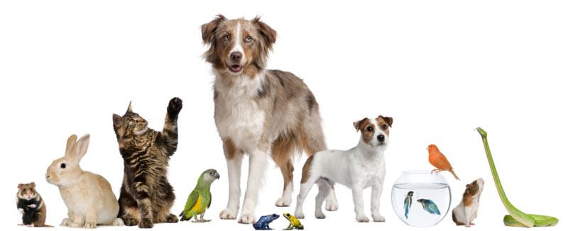 Налог на домашних животных в России в 2019 году