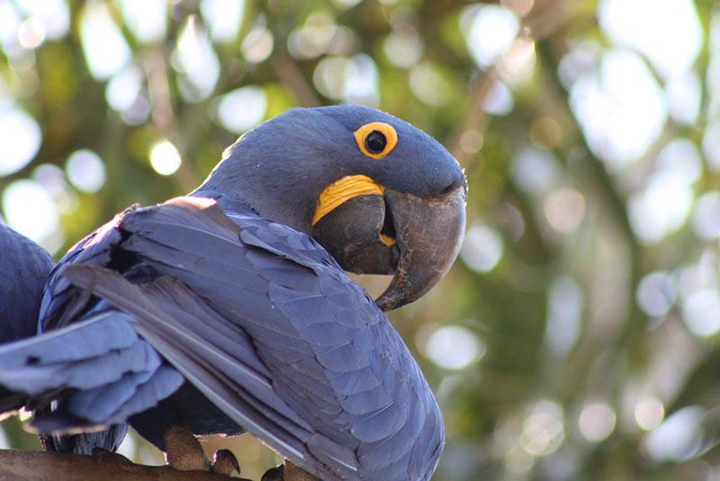 Маленькие попугаи характеризуются не только очень миниатюрными размерами, но и внешней красотой
