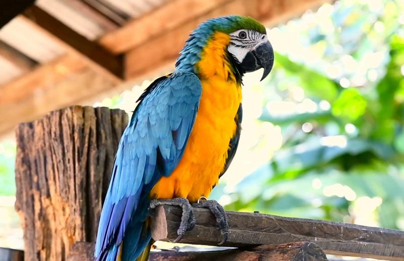 Лесные птицы: Попугаи