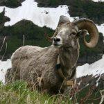 Животные севера (Арктики)