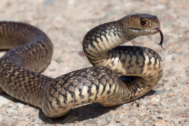 Большинство укусов змей происходят из-за неосторожности или невнимательности человека