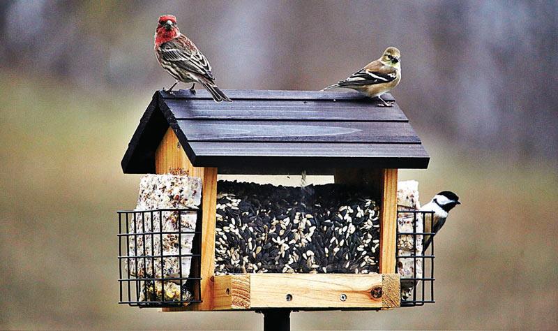 Для привлечения птиц располагайте кормушки на одних и тех же местах
