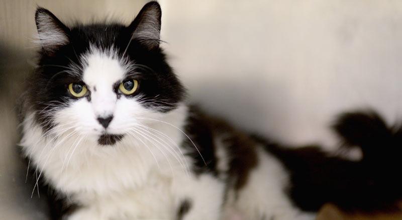 КотЭрвин получил одобрение ветеринарных врачей, а кроме прочего, имеет многочисленные положительные отзывы владельцев кошек