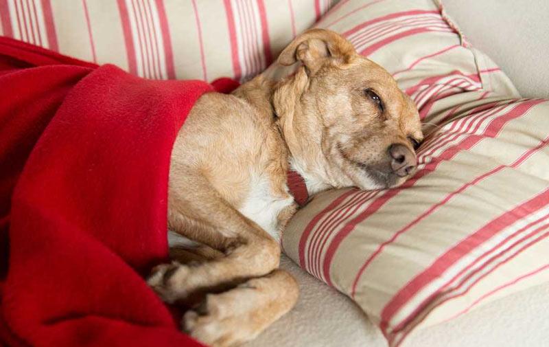 Общая продолжительность лечения определяется ветеринарным врачом и, как правило, варьирует от 2-3 нескольких дней до одной недели