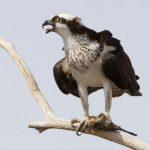 Птицы Краснодарского края: лесные, степные, побережья, водоплавающие