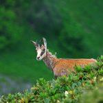 Животные Краснодарского края, кто обитает