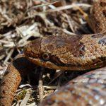 Змеи Санкт-Петербурга и Ленинградской области: ядовитые и неядовитые
