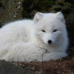 Животные Сибири, кто обитает