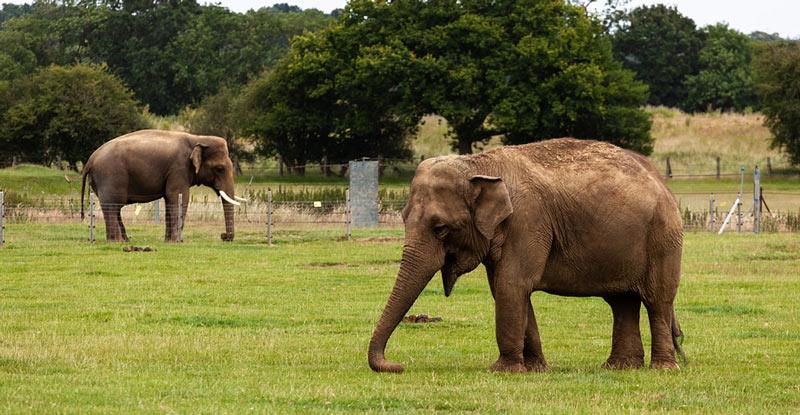 Животные Китая: Азиатский или индийский слон