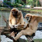 Животные Китая, кто обитает